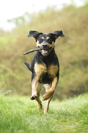 Luxury Dog Kennels, Oxfordshire
